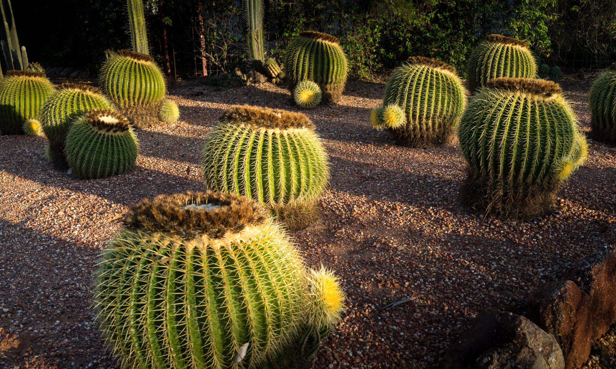 Welcome to Bevan's Cactus Nursery